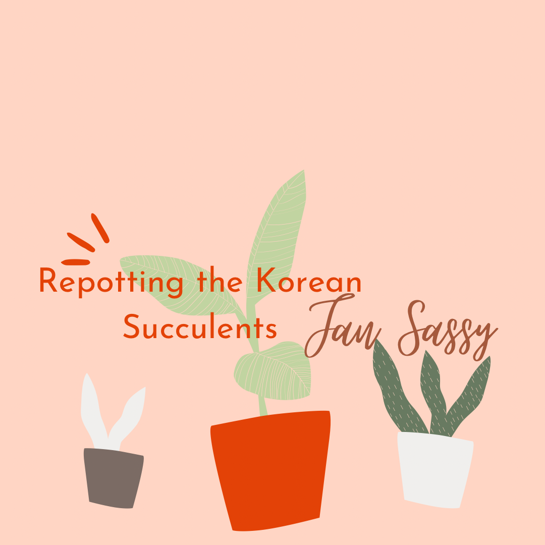 Repotting the Succulents