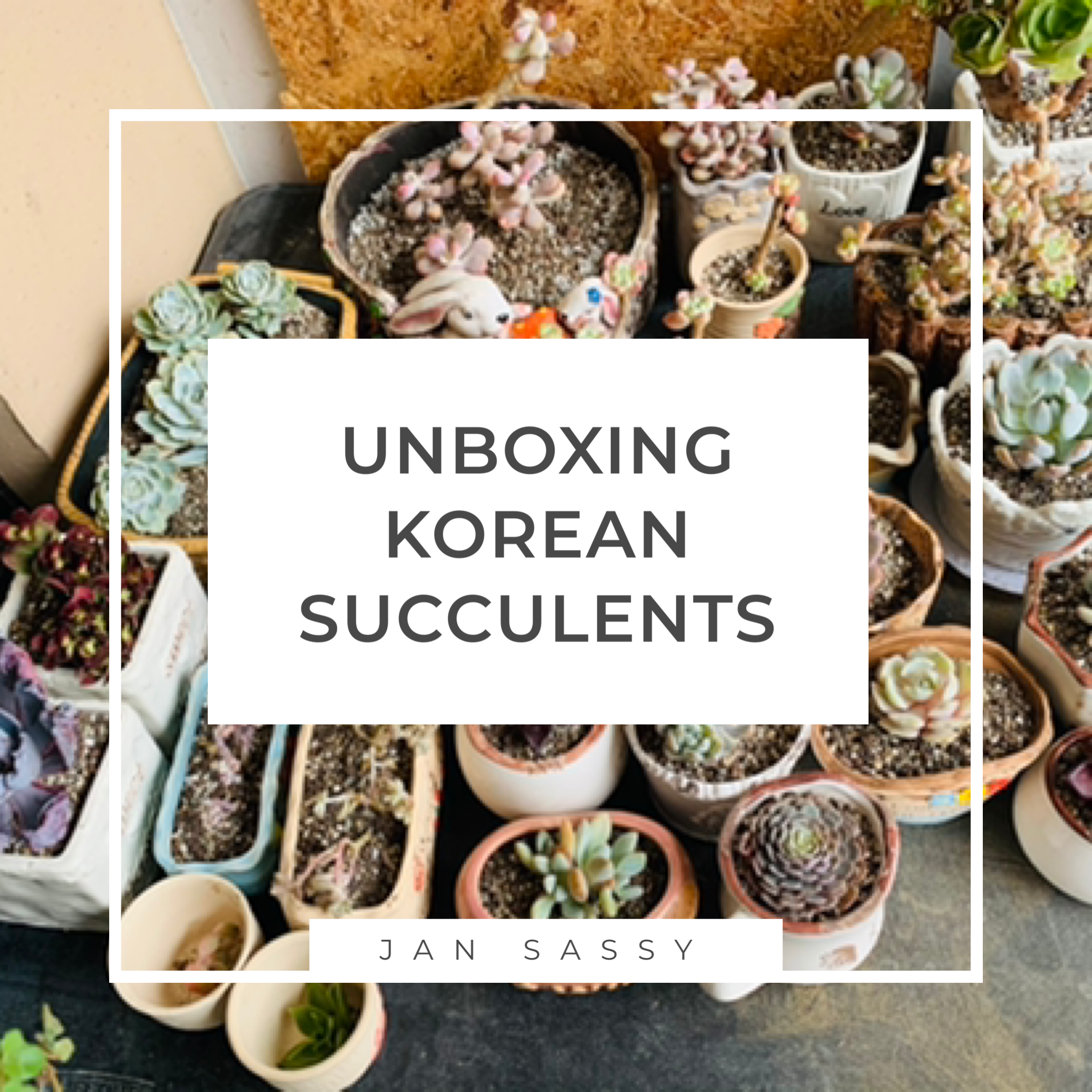 Unboxing Korean Succulents